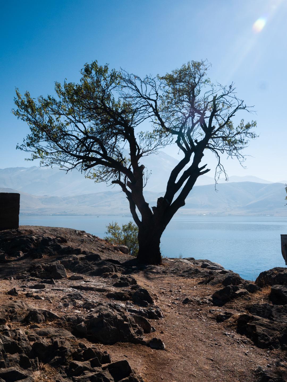 Sur l'île d'Akdamar, un arbre majestueux à proximité de l'église Sainte-Croix semble réconcilier la terre et le ciel. Van (Turquie), novembre 2010.